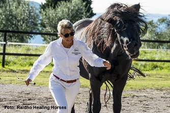 Pferde zeigen den Weg