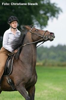 Mein Pferd sagt Nein