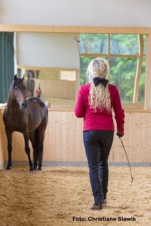 Wie viel Ausbildung braucht das Pferd?