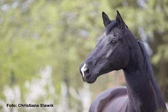 Die Individualität des Pferdes verstehen