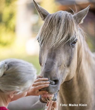 Natural Horse 35 03-2021 Medical Training: Zähne Vorbereitung auf den Dentisten