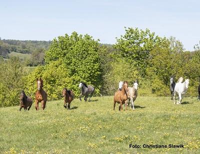 Natural Horse 35 03-2021 Ökologische Pferdehaltung Wie kann man Pferde artgerecht und naturnah halten?
