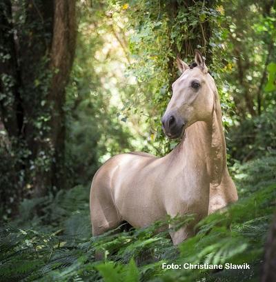Natural Horse 35 03-2021 Das Pferd als Naturschützer Der ökologische Hufabdruck