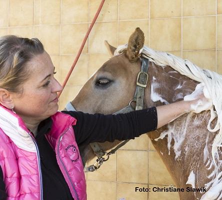 Natural Horse 35 03-2021 Mikroorganismen im Stall Bakterien, Pilze und Co rund ums Pferd