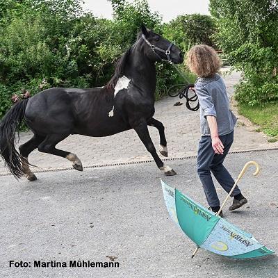 Angst beim Pferd trifft auf Angst beim Menschen