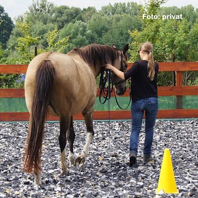 Natural Horse 36 Spezial Angst bei Pferd und Mensch